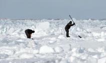 Kanada'da her yıl 300 binden fazla fok vahşice katlediliyor