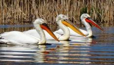 Türkiyenin botanik bahçesi Dilek Yarımadası yeni ziyaretçilerini bekliyor