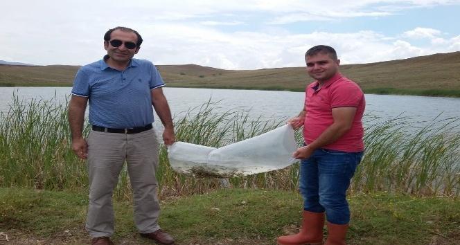 Sungurluda gölete 10 bin sazan yavrusu bırakıldı