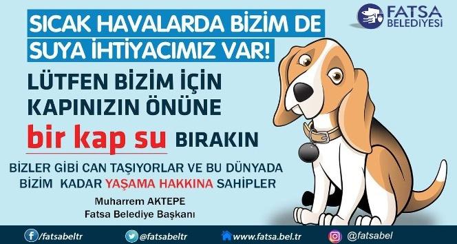 Başkan Aktepeden sokak hayvanları için bir kap su çağrısı