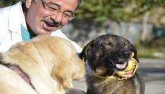 Büyükşehirden sokak hayvanlarına yardım eli