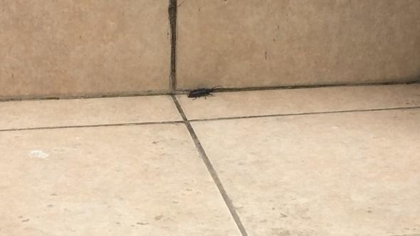Korkunç olay! Evinden çıkan böcekler fark edilince...