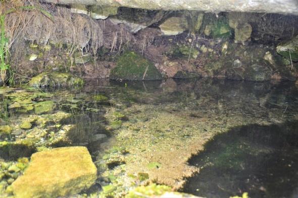 Bu değerli kaynak suyu yıllardır boşuna akıyor