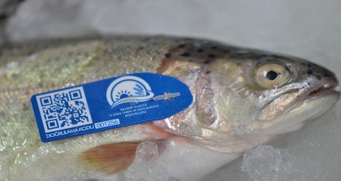 (Özel Haber) Balıklar mavi karekod ile takip edilecek