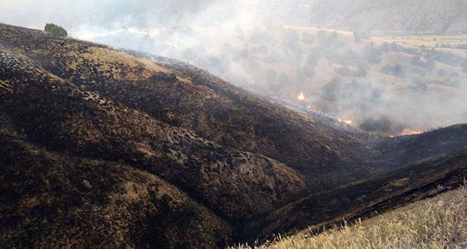 Tosyada tarım arazisindeki yangında 100 dönüm alan kül oldu