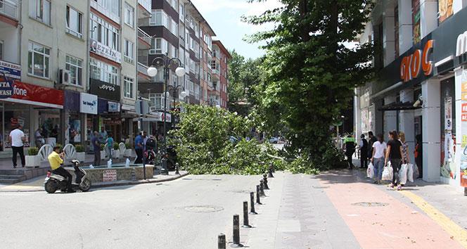 Dev ağacın dalı kırıldı, cadde trafiğe kapandı