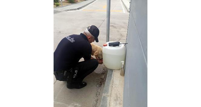 Polis memuru, sokak köpeğine eliyle su içirdi