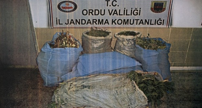 Ordu'da uyuşturucu operasyonlarında 10 gözaltı