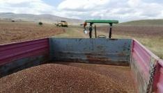 Gümüşhanede Karabuğday hasadı başladı