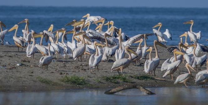 Longozdaki sonbahar göçü fotoğraflara böyle yansıdı
