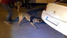 Narkotik köpeği Çakı araçtaki gizli esrarı buldu