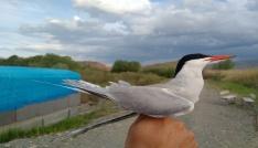 Kuş halkalama raporu açıklandı