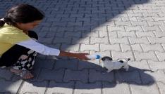 Sokakta bulduğu yavru köpeği biberon ile besliyor
