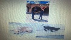 Jandarma köpek hırsızlarını yakaladı