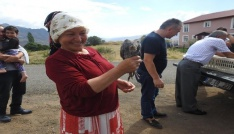 Kırım Kongo Kanamalı Ateşi Hastalığı ile kene savar tavuklarla mücadele edilecek