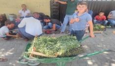 İncir ve semiz otu satarak ailelerinin geçimine katkı sağlıyorlar