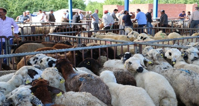 İl Müdürü Şahin Kurbanlık Hayvan satış yerlerini denetledi
