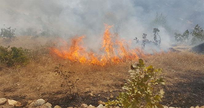 Fıstık bağlarında yangın