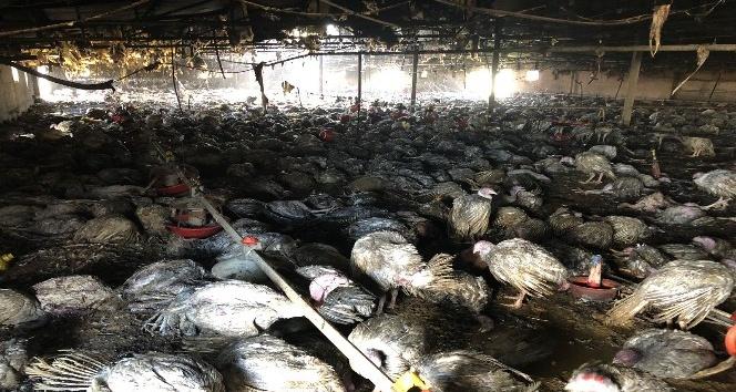 Çiftlik yangınında 8 bin hindi ve 10 buzağı telef oldu
