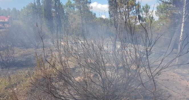 Arıcının yaktığı ateş ormana sıçradı
