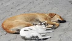 (Özel) Kedi ile köpeğin dostluğu görenleri hayrete düşürüyor