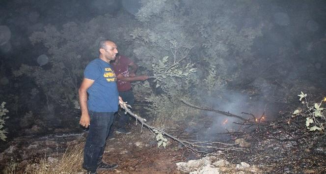 Midyatta korkutan orman yangını