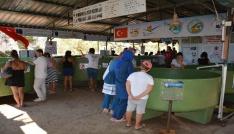 Deniz kaplumbağalarına yerli ve yabancı turist ilgisi