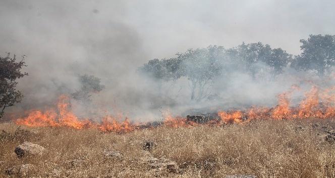 Midyatta ormanlık alanda çıkan yangın sürüyor