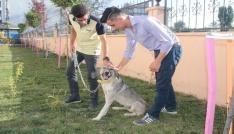 Ölüme terk edilen köpek, engellilerin Dostu oldu
