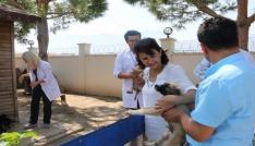 Manisada Hayvan Bakım Merkezi bayramda görevde