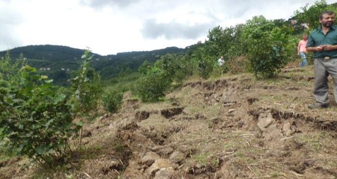 Ordudaki selde 809 ton fındık, 17 bin civciv kayboldu