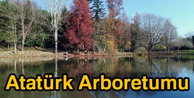 Atatürk Arboretumu nerededir? Atatürk Arboretumu içinde neler var? (HADİ SORUSU)