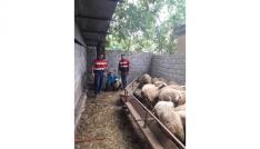 Çalınan koyunlarına kavuşan kadının sevinci