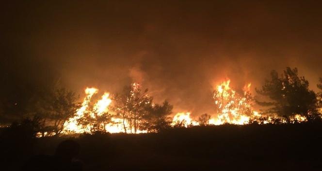 Manisada ormanlık alanda yangın çıktı