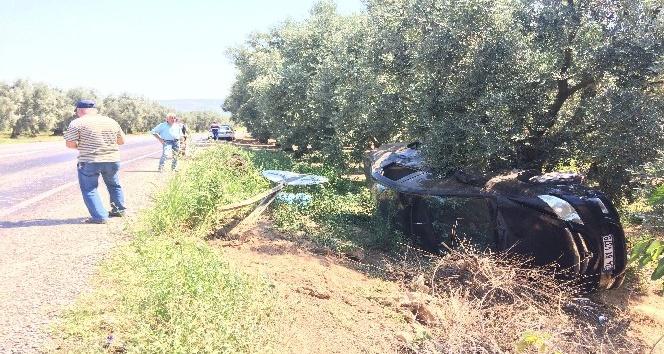 Kadın sürücü yol levhasına çarpıp zeytinliğe uçtu