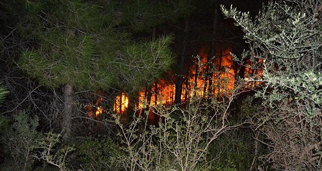 Kozan'da orman yangını..