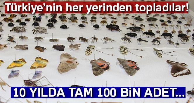 Türkiye'nin her yerinden topladılar! 10 yılda tam 100 bin adet...