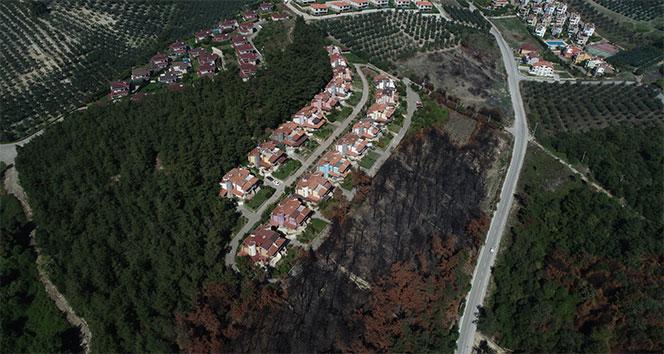 Lüks villaların yanında küle dönen ormanlar yeniden yeşeriyor