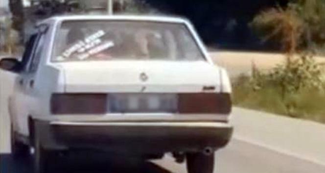 Otomobilin arka koltuğundaki dana görenleri şaşırttı