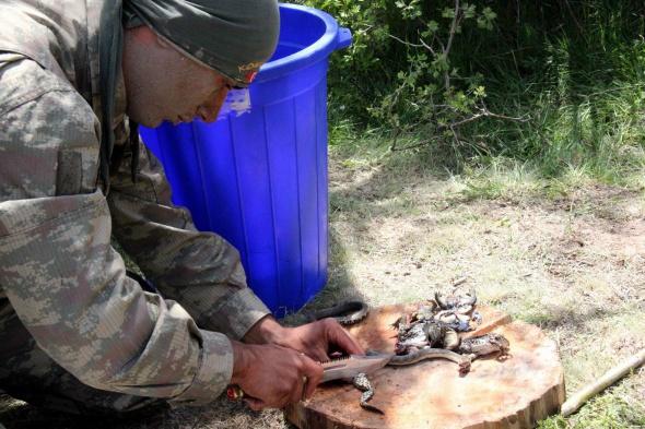 Komandoların arazi menüsü: Yılan, kurbağa ve tavuk
