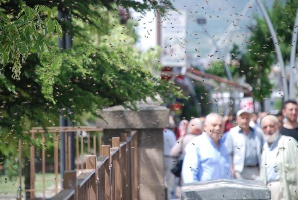 Şehre inen arılar vatandaşlara zor anlar yaşattı!