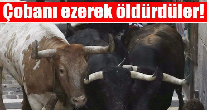 Boğalar çobanı ezerek öldürdü