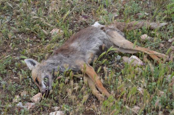 Bu hayvanları kim katlediyor?