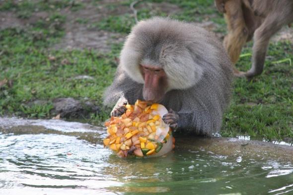 40 derecede bunalan hayvanlara hortumlu serinlik