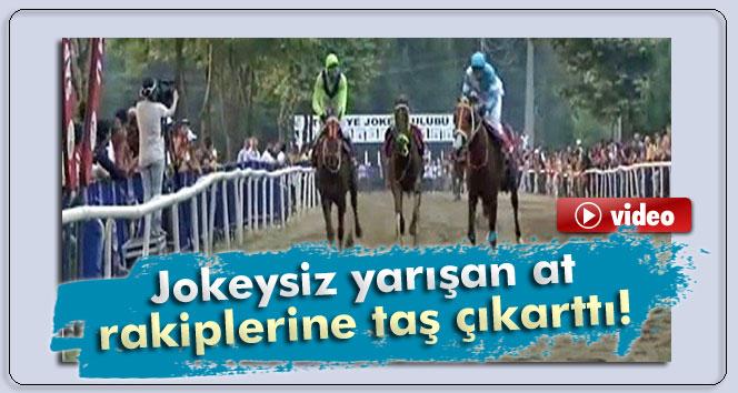 Jokeysiz yarışan at rakiplerine taş çıkarttı!