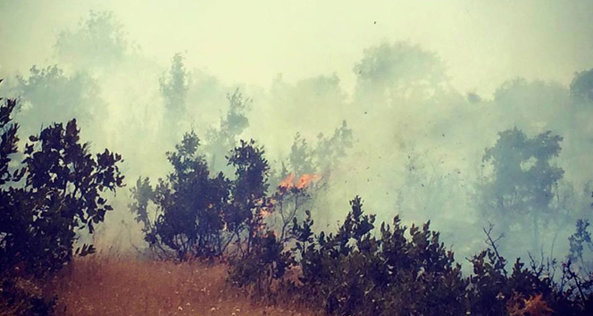 İşte Türkiye'nin yangın haritasıorman yangını,osmaniye,yangın