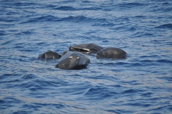 Kaçakların botuna yük gemisi çarptı: 13 ölü
