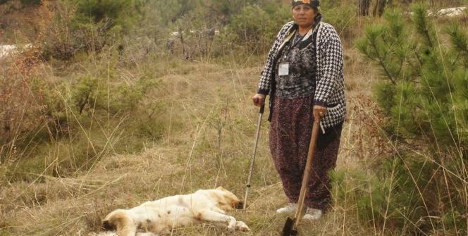 Aç kalan ayılar Kastamonu'da şehre indi