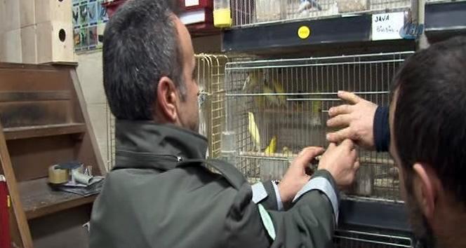 hayvan pazarı eskişehir
