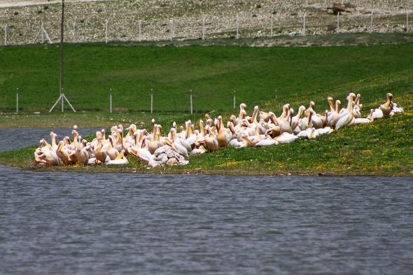 Göller göçmen kuşlarla şenlendi